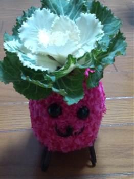 20120102葉牡丹ピンク.jpg
