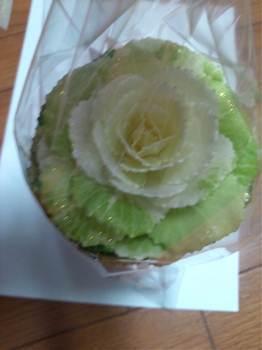 20120102葉牡丹白.jpg
