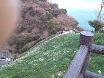 20120104水仙郷急1.jpg
